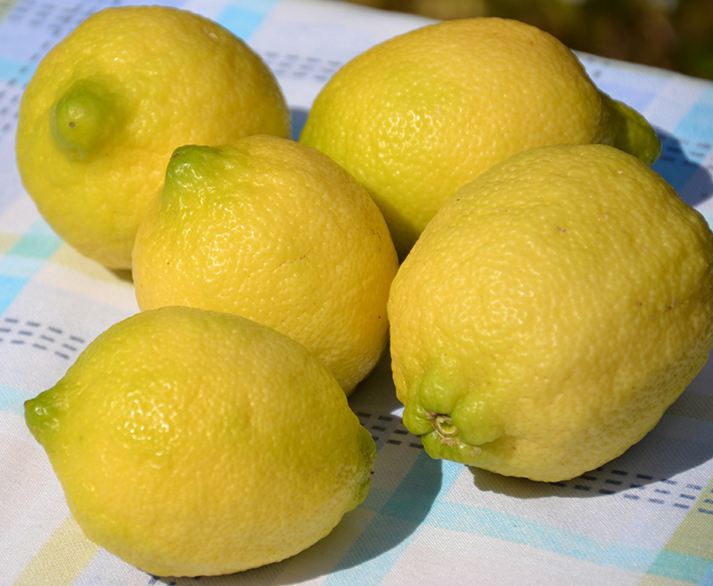 Beautiful Greek lemons