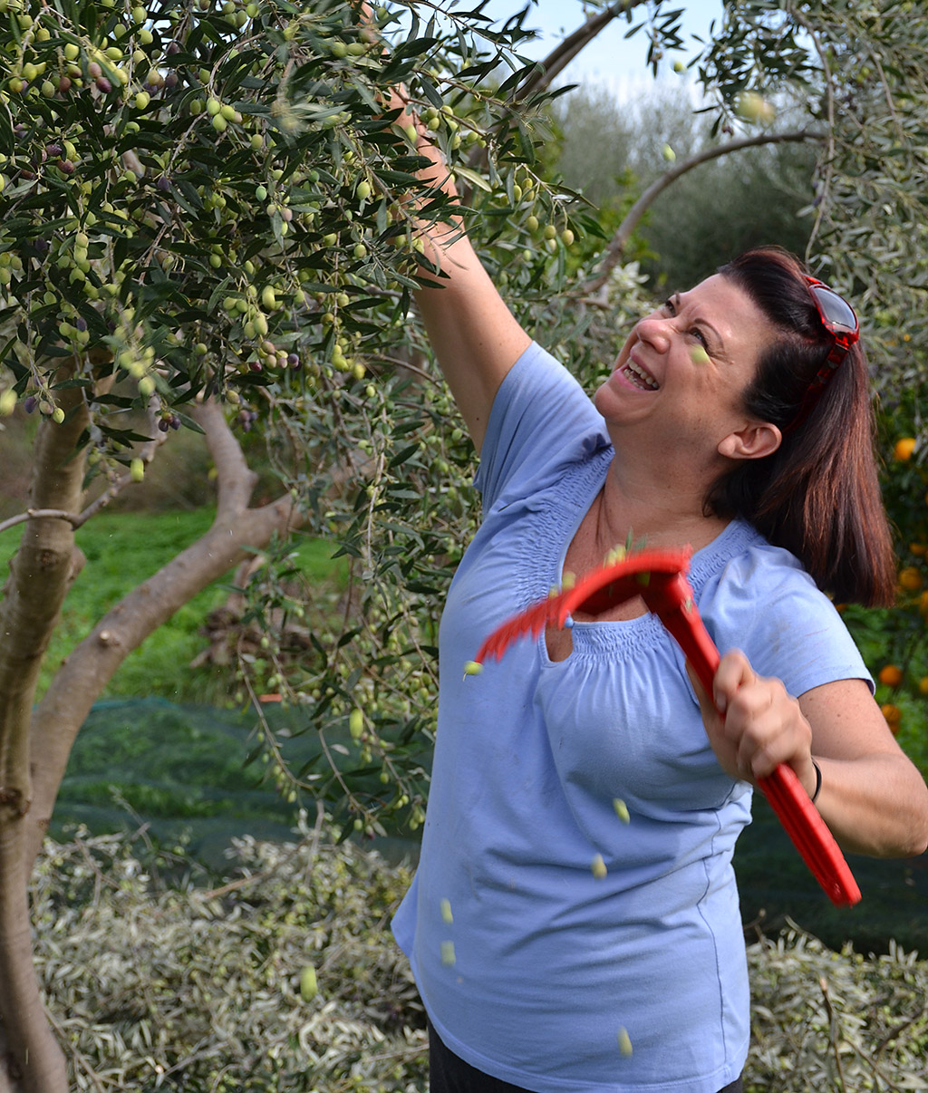 Olive picking week at Odyssey