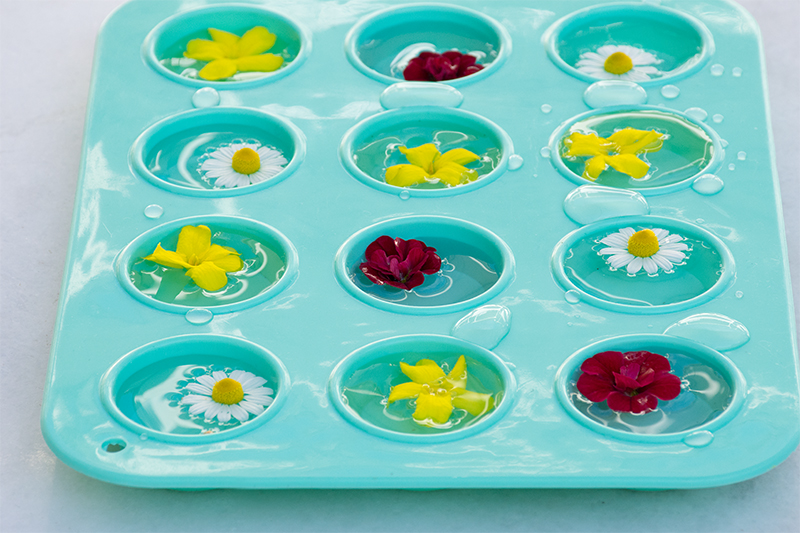 Making ice cubes with edible flowers Odyssey Poros Greece