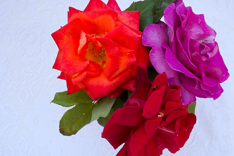 Roses for the rose lemonade Odyssey Poros Greece
