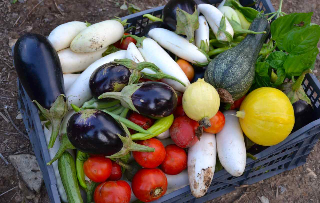 Katerinas-vegetables-from-her-farm
