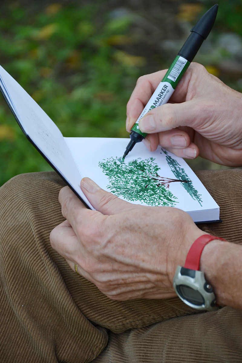 Olive-trees-give-inspiration-for-drawing