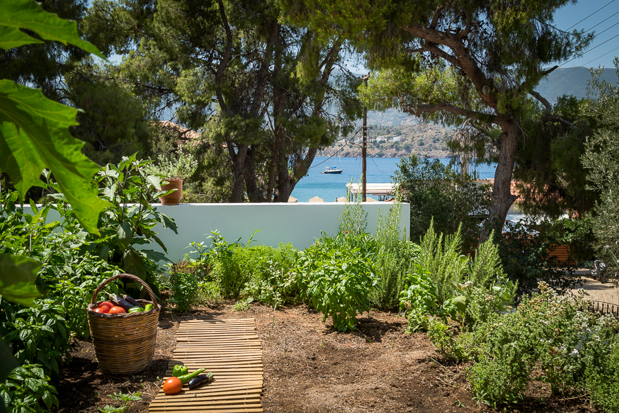 Vegetable garden at Odyssey Poros Greece